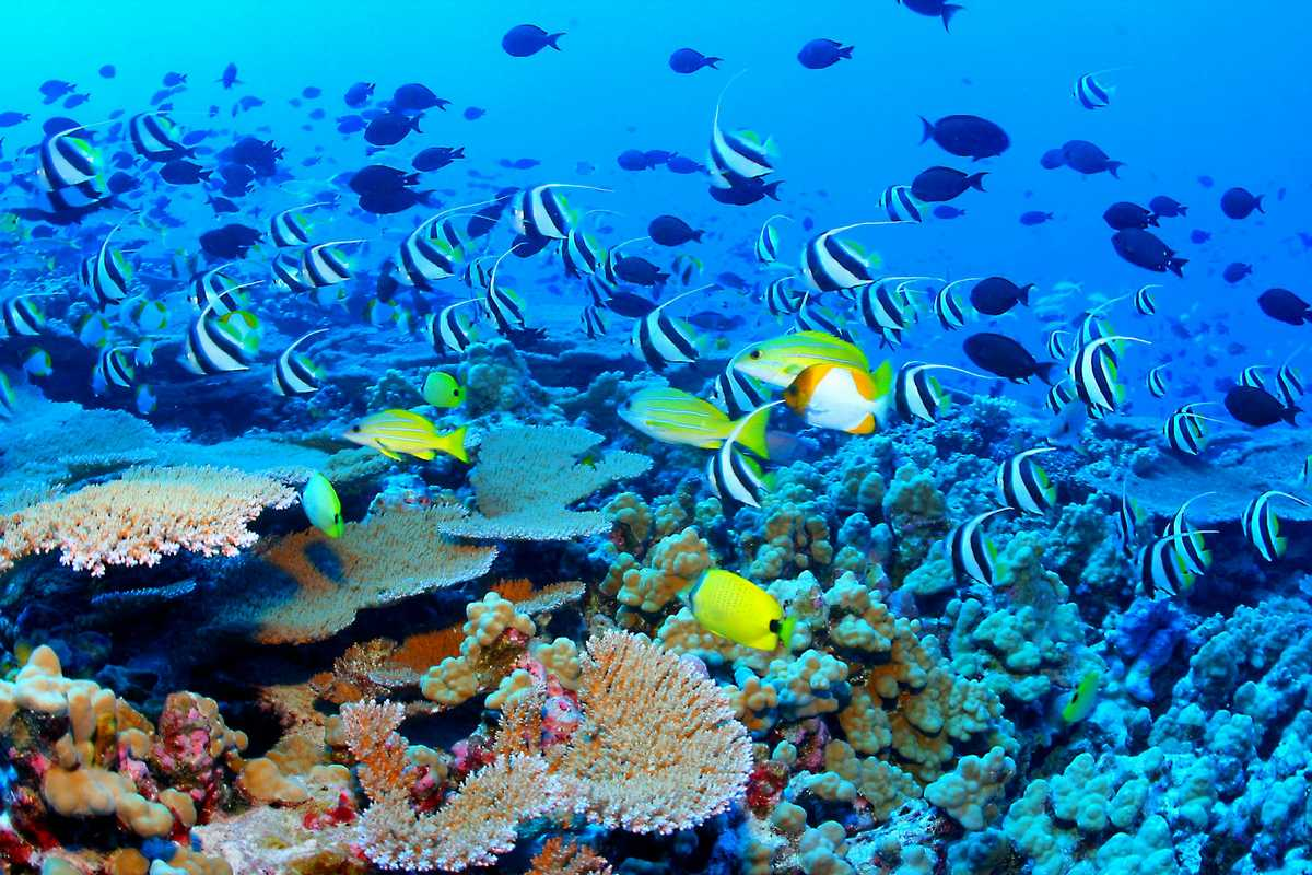 Amazing PLaces Holiday, Great Barrier Reef, Australia, Biodiversity