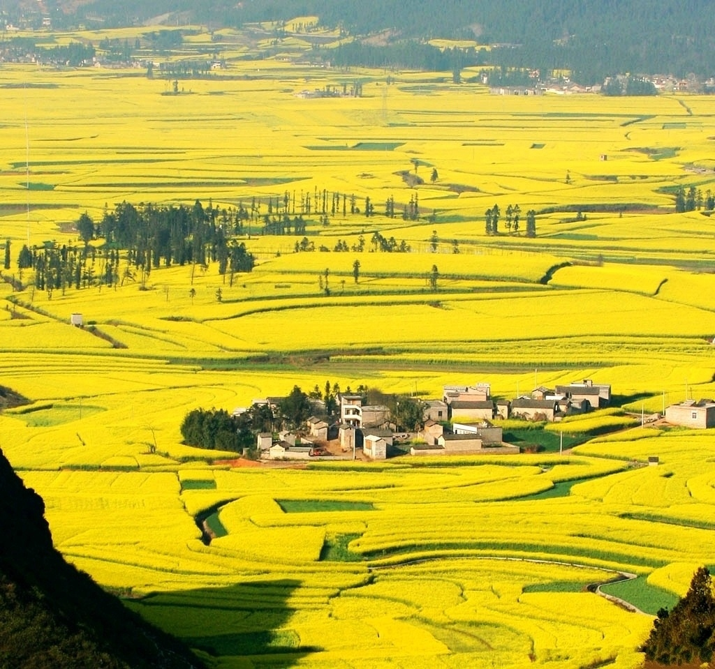 Amazing PLaces Holiday, Luoping County, China, Canola field panorama