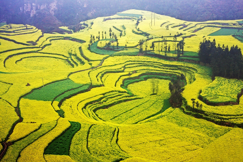 Amazing PLaces Holiday, Luoping County, China, Canola field aerial view