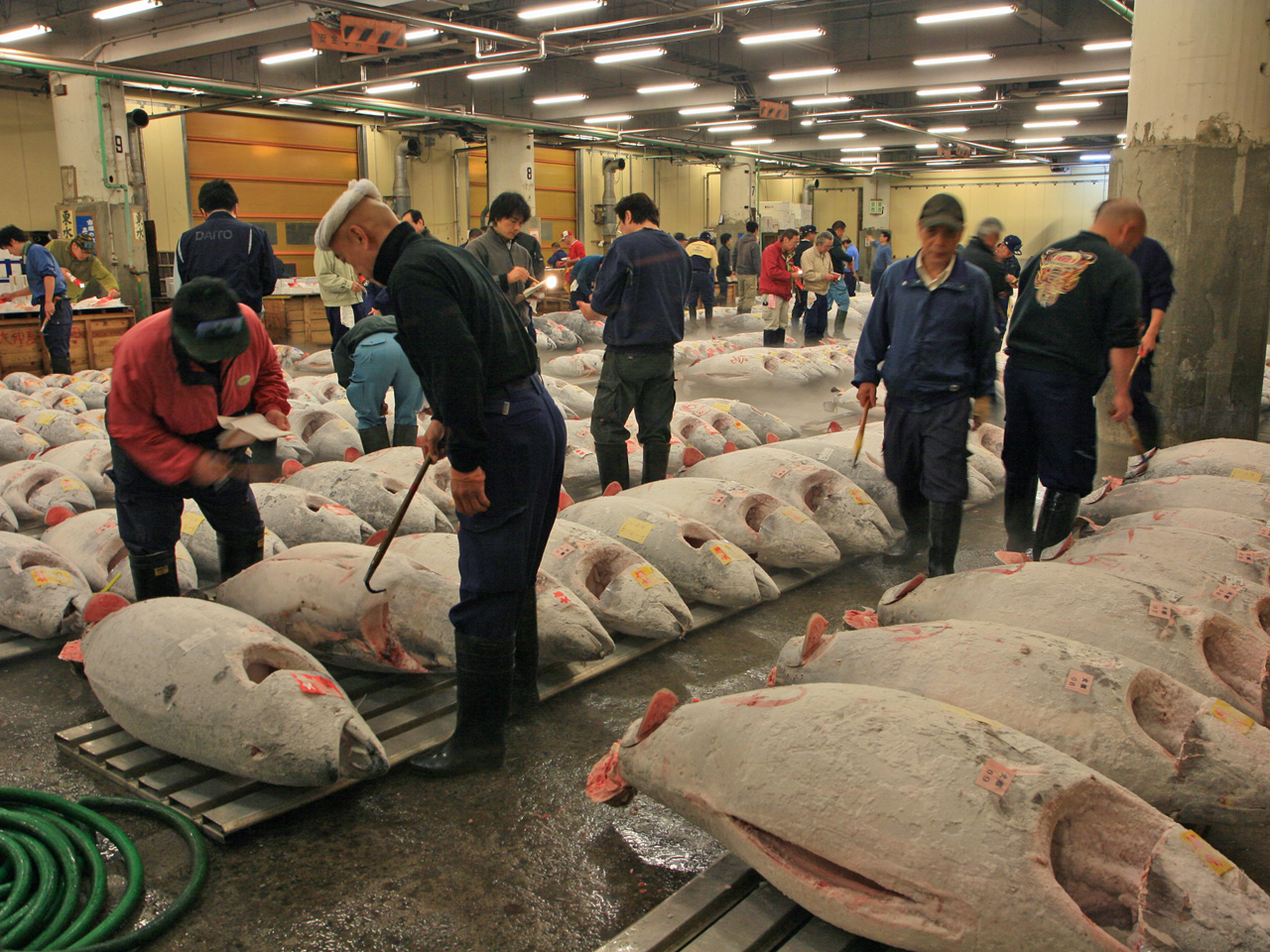 Fresh food market tokyo japan tsukiji fish market for Japan fish market
