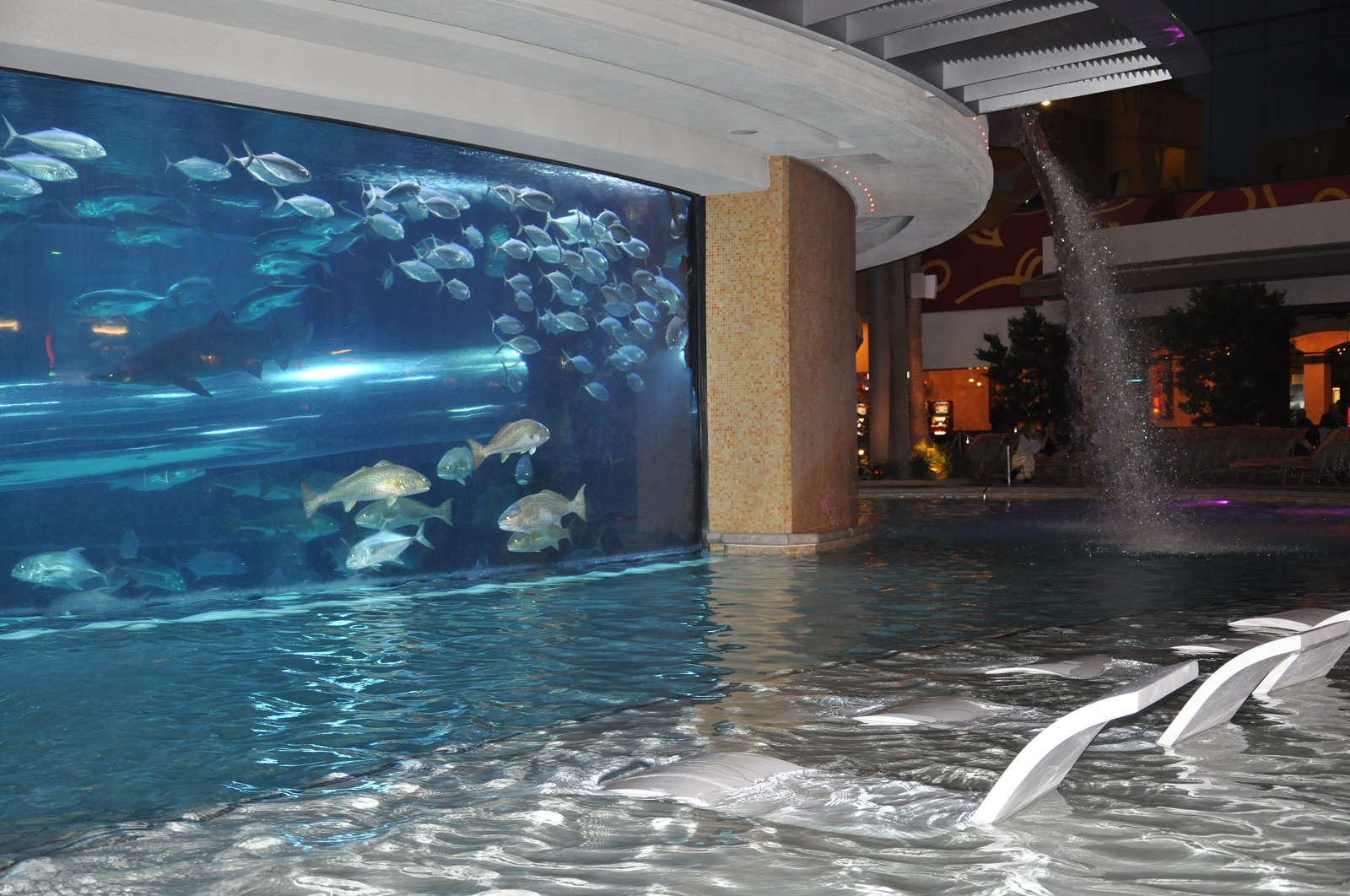 Impressive Swimming Pool, Las Vegas, SUA, Golden Nugget night view