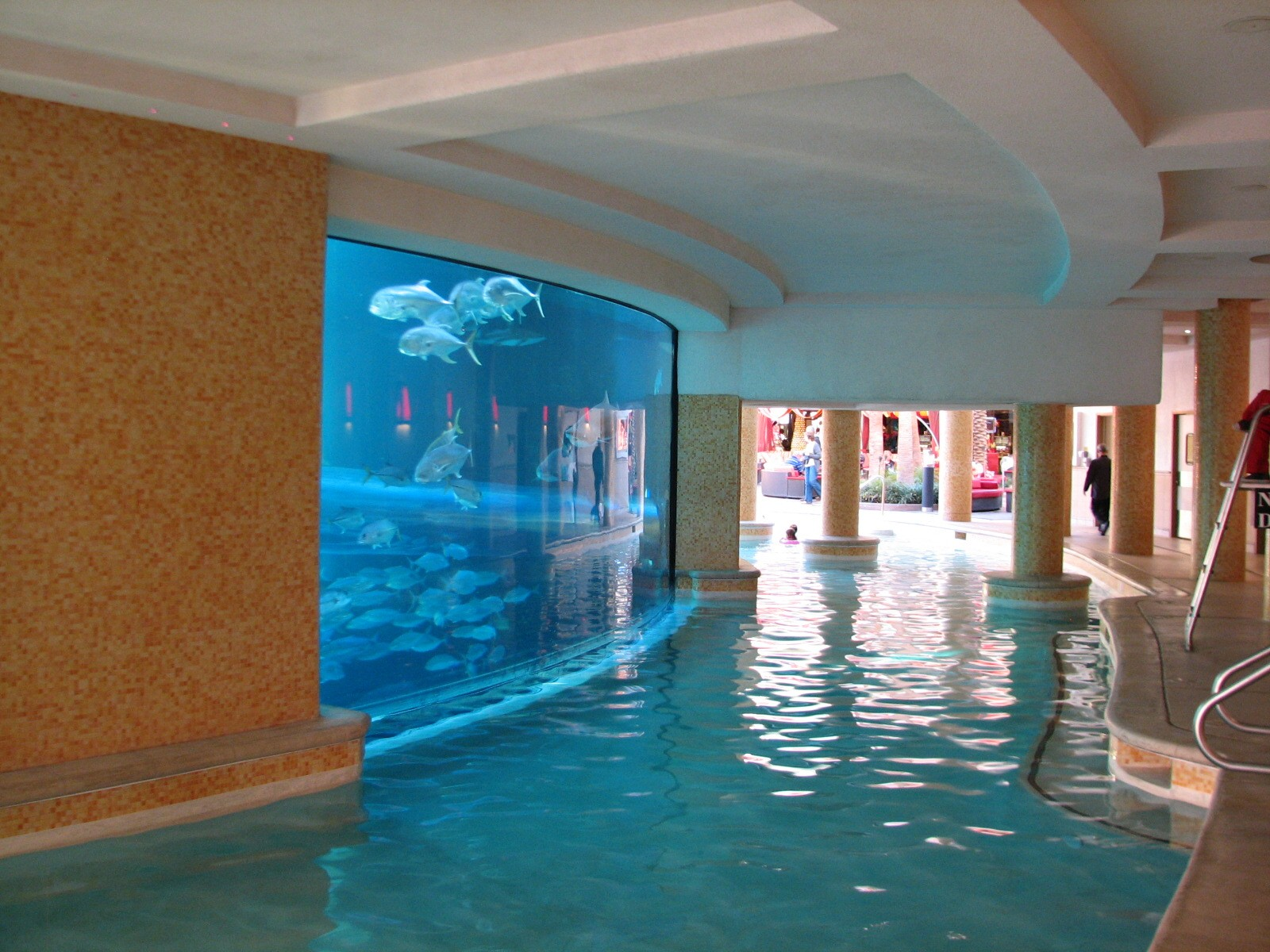 swimming pool las vegas sua golden nugget morning time - Cool Indoor Pools With Fish