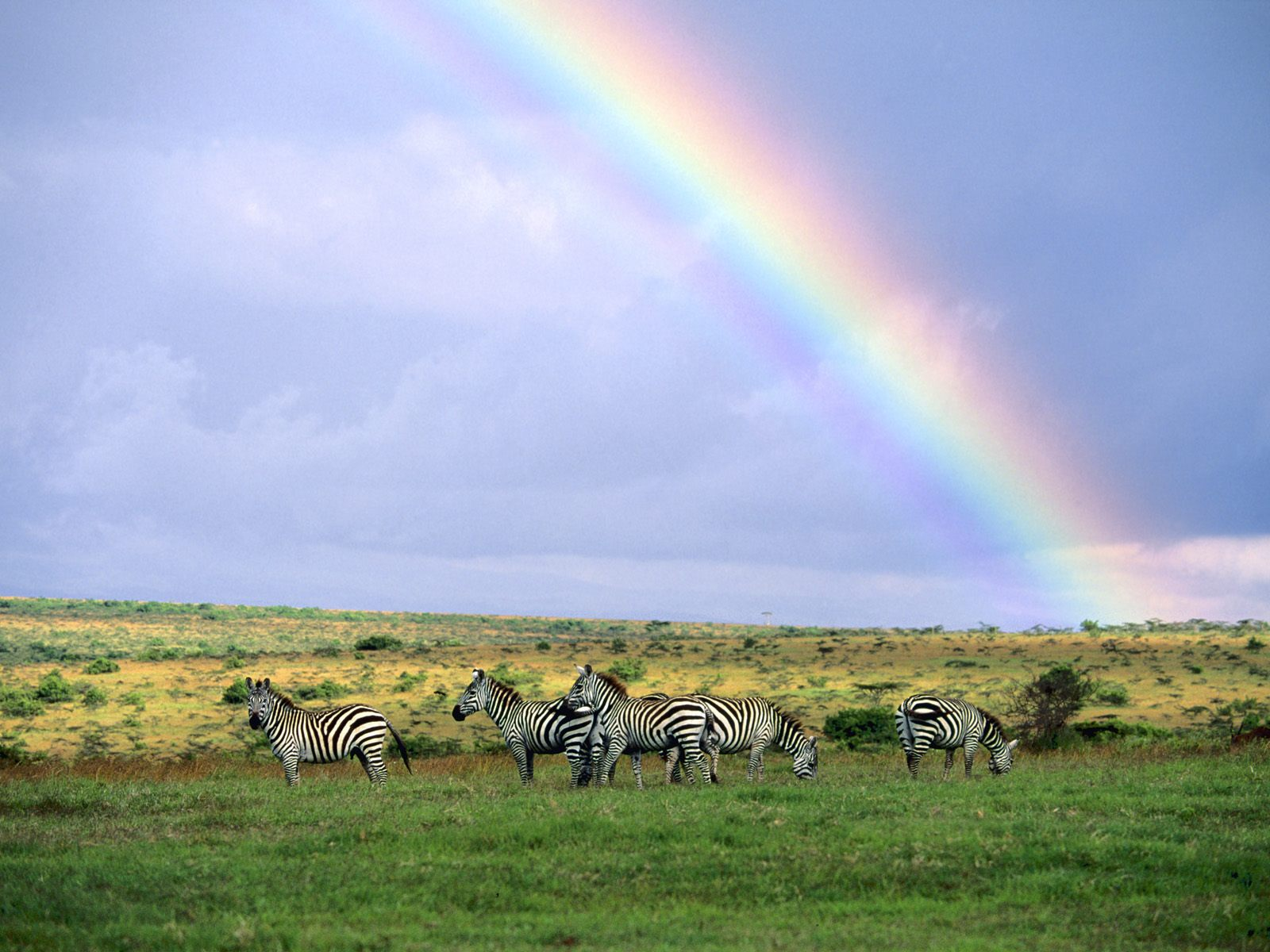 Kenya, Africa, Rainbow After the Storm