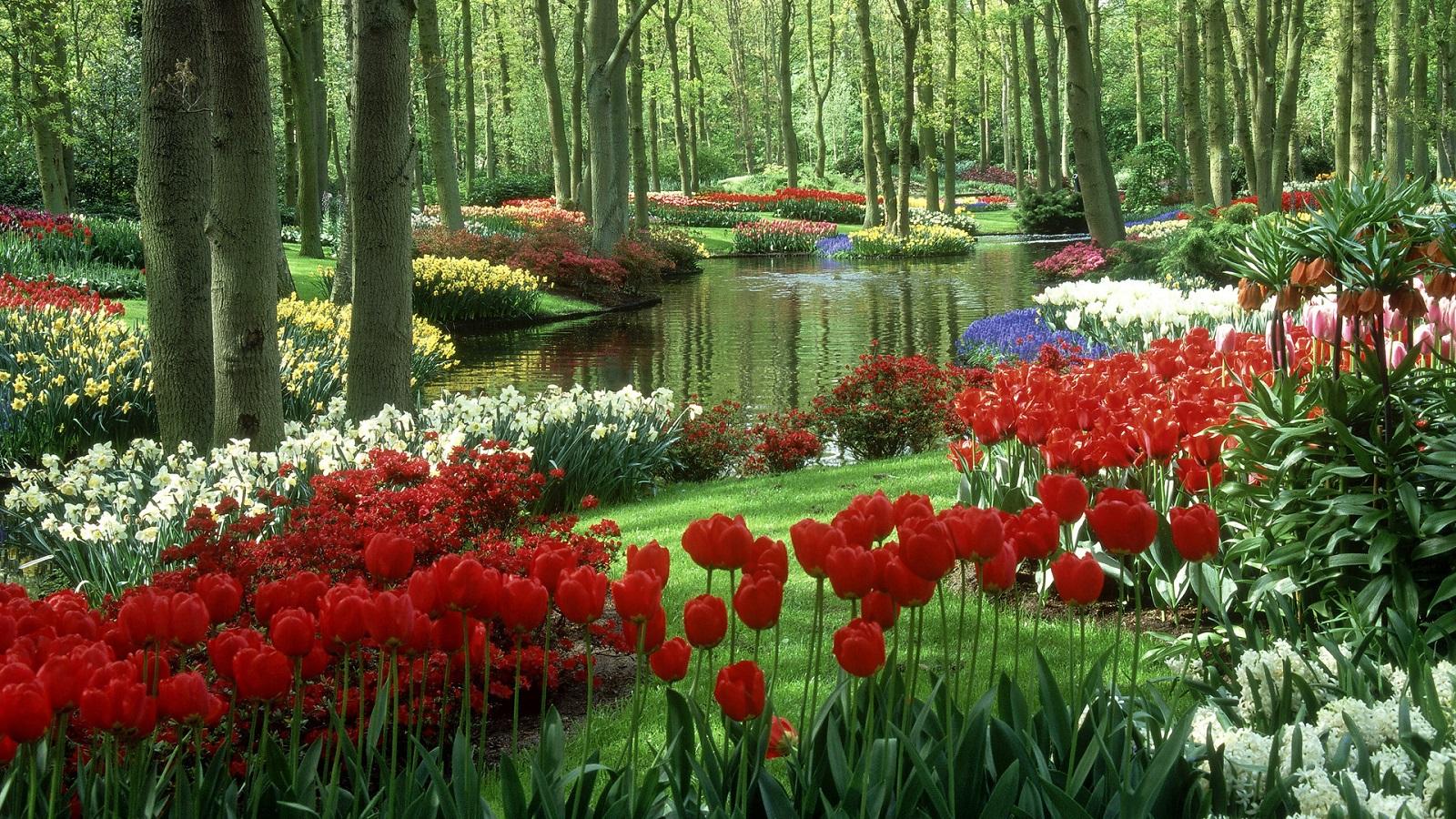 Perfect Spring Holiday, The Netherlands, Keukenhof Gardens, Flowers  Arranged Garden .
