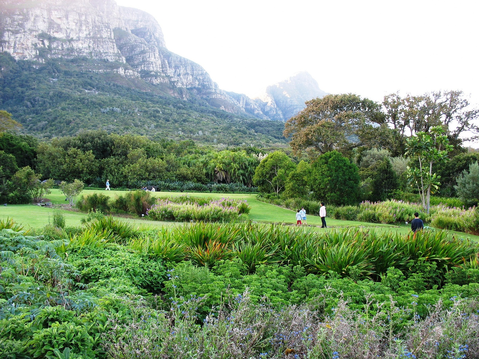 Kirstenbosch, South Africa, National Botanical Garden panorama