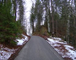 Germany, Europe, The Bavarian Forest near the Neuschwanstein castle
