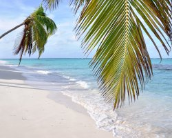 Shoal Bay, Anguilla, America, Sandy beach with palms