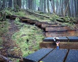 Trend Destination Holiday, Haida Gwaii, British Columbia, Canada, Wooden stairs trough forest