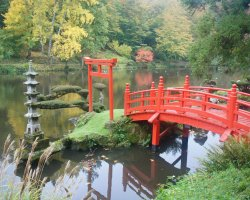 Romantic Destination, Japan, Asia, Maple trees and a pond