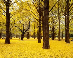 Romantic Destination, Japan, Asia, Autumn in park