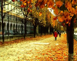 Paris, France, Autumn leaves on streets