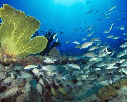 Bahamas, America, Ocean life with reef