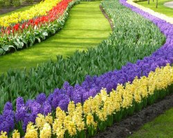 Beautiful Garden Holiday, Keukenhof Garden, Netherland, Colorful flower show