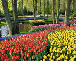 Beautiful Garden Holiday, Keukenhof Garden, Netherland, Colorful tulips scenery