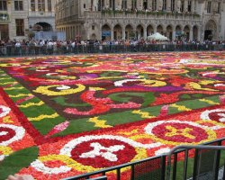 Brussels, Belgium, Flower carpet closer view