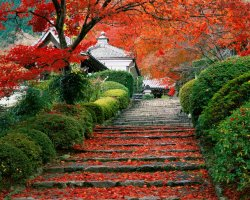 Colorful Vacations, Kyoto, Japan, Garden staircase