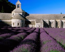 Colorful Vacations, France, Europe, Lavender Field Abbey of Senanque