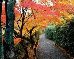 Colorful Vacations, Kyoto, Japan, Autumn colors