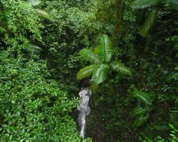Costa Rica, America, Waterfall view from a hangin bridge