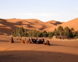 Country Holiday, Merzouga, Morocco, Oasis overview