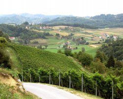 Zagorje, Croatia, Vineyards hills