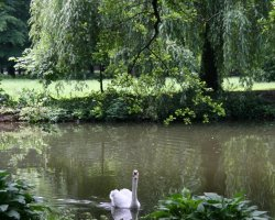 Croatia Holiday, Zagreb, Croatia, Maksimir Park swan on the lake