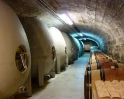 Cultural Holiday, Paris, France, Egg Shaped Wine Tanks