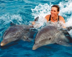 Dolphins Destination, Hawaii, SUA, Vacations with dolphins