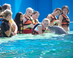 Dolphins Destination, Hawaii, SUA, Vacations with dolphins3