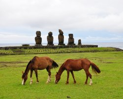 Easter Island, Chile, South America, Horses grazing