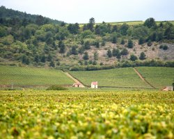 Foodies Holiday, France, Wine region Burgundy