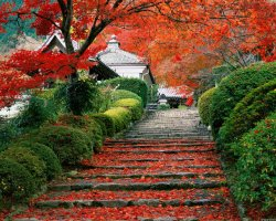 Holidays Ideas, Kyoto, Japan, Garden staircase on autumn