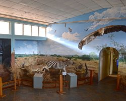 Kingdom of Swaziland Holiday, National Museum, Swaziland, Africa, Animals