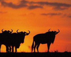 Kingdom of Swaziland Holiday, Kruger National Park, Swaziland, Africa, Sunset silhouettes