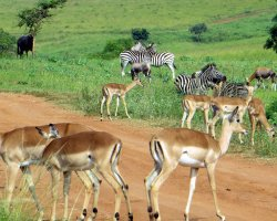 Kingdom of Swaziland Holiday, Mlilwane, Swaziland, Africa, Wildlife
