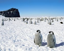 Life Changing Holiday, Antarctica, Penguins