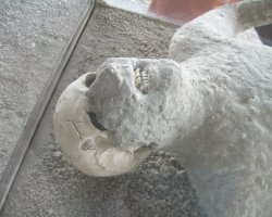 Lost Cities Attraction, Pompeii, Italy, Human body from ruins