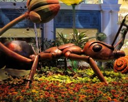 Luxury Holiday, Las Vegas, USA, The Bellagio Hotel, Conservatory Ant