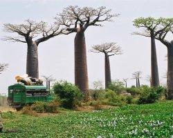 Madagascar, Africa, Baobab Trees and Taxi