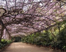 Malaga, Spain, Botanical Gardens plant tunnel