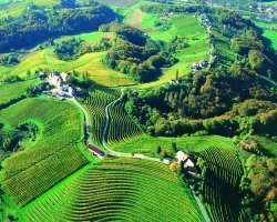 March touristic destination, Slovenia, Viticulture and Winemaking land