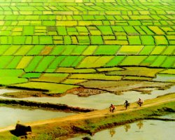 The Mekong Delta, Vietnam, Asia, Rice fields
