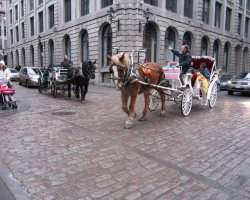 Montreal, Canada, Horse Drawn Carriage