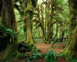 National Park Vacation, Washington, USA, Olympic National Park 01
