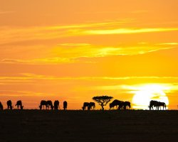 National Park Holiday, National Park Serengeti, Africa, Sunrise silhouettes