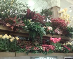 New York, U.S.A., Macys flower store