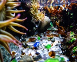 Oddest Beach Holiday, Glass Beach, Fort Bragg, California, Underwater view