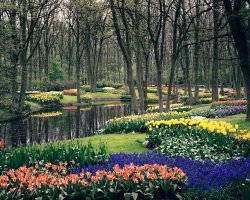 Perfect spring Holiday, The Netherlands, Keukenhof Gardens, Full bloom