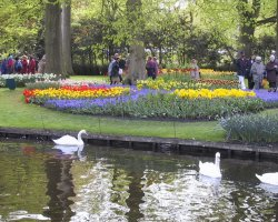 Perfect spring Holiday, The Netherlands, Keukenhof Gardens, Open day