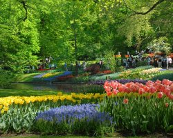 Perfect spring Holiday, The Netherlands, Keukenhof Gardens, Visitors